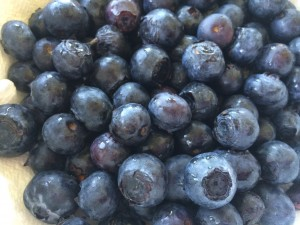 Blueberries are high in antioxidants!