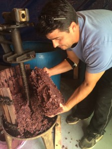 Rudy showed me the grape sediment and skins collected from the presser to make wine vinegar. Last years crop made 4 1/2 gallons!